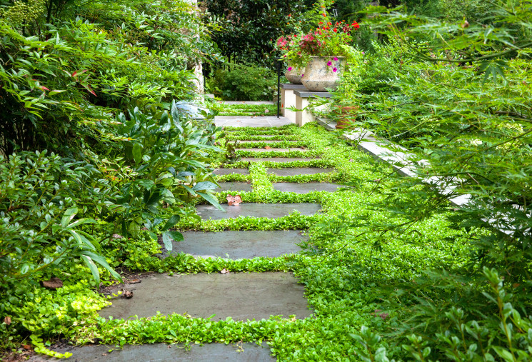 Path with lined with lush plantings