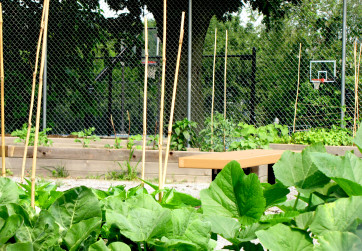 View of community garden with basketball courts in background