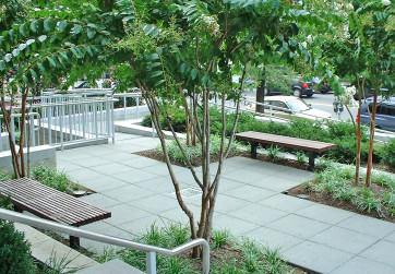 Upper entry plaza with tree plantings and site furnishings