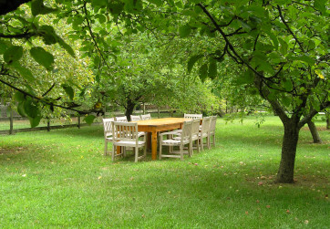 Orchard arranged for outdoor entertaining