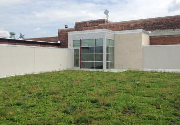 Green roof on upper level