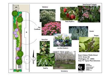 Representative plantings