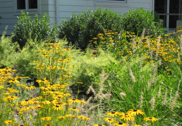 A colorful, dynamic rain garden animates the front entrance of a zero net energy LEED Platinum property